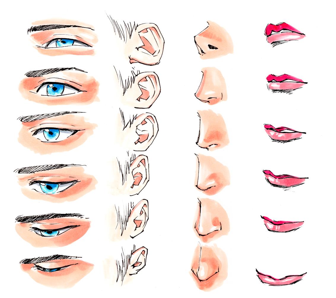 顔の描き方 模写のコツ イラストの上達
